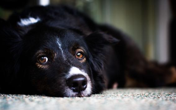 배경 화면 검은 개, 수면, 모습, 얼굴, 눈