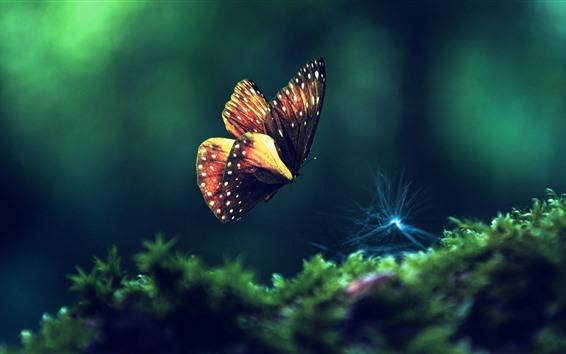 Wallpaper Butterfly flying, green grass