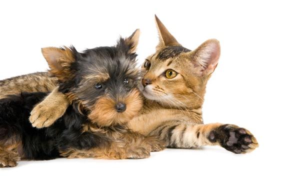 Fondos de pantalla Gato y perro, fondo blanco