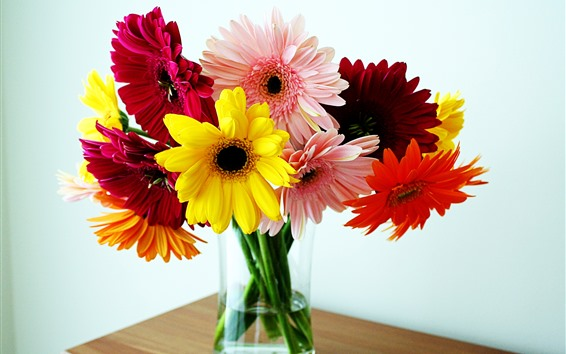 Papéis de Parede Flores coloridas gerbera, vaso, mesa