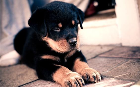 Wallpaper Cute puppy, ground, paws