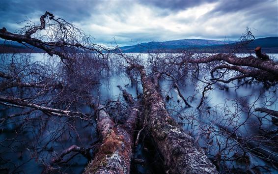 Papéis de Parede Árvores secas, lago, montanhas, nuvens
