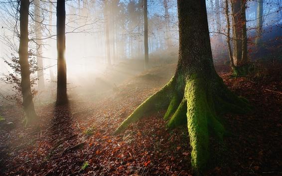 Обои Лес, солнечные лучи, деревья, осень