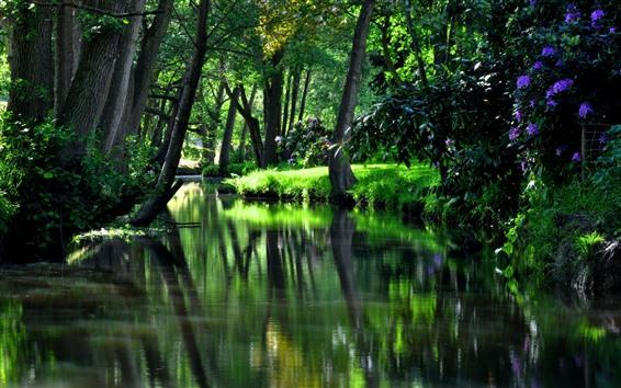 배경 화면 정원, 강, 나무, 녹색, 여름