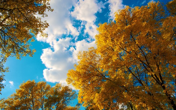 Wallpaper Golden autumn, trees, leaves, sky, white clouds