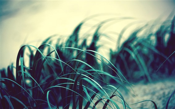 Wallpaper Grass leaves, wind, dusk
