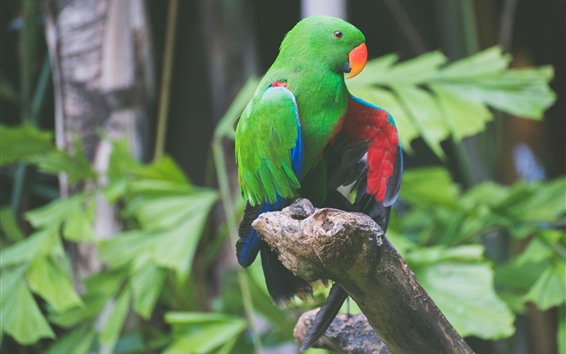 Wallpaper Green feather parrot, bird, colorful