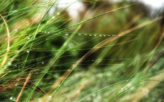 Обои Зеленая трава, роса, дымка, лето