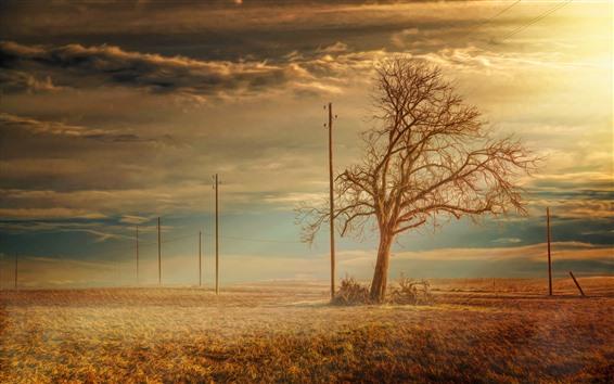 Wallpaper Lonely tree, power lines, fields, sunshine