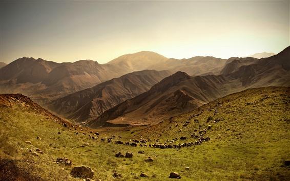 Papéis de Parede Muitas ovelhas, montanhas