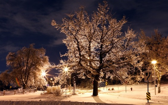 Wallpaper Night, trees, park, lights, backlight, glare
