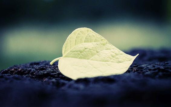 Wallpaper One green leaf, texture, ground