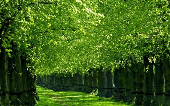Wallpaper Park, path, trees, grass, green