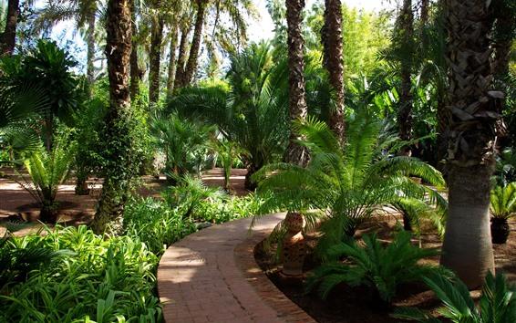 Fond d'écran Parc, arbres, chemin, tropical