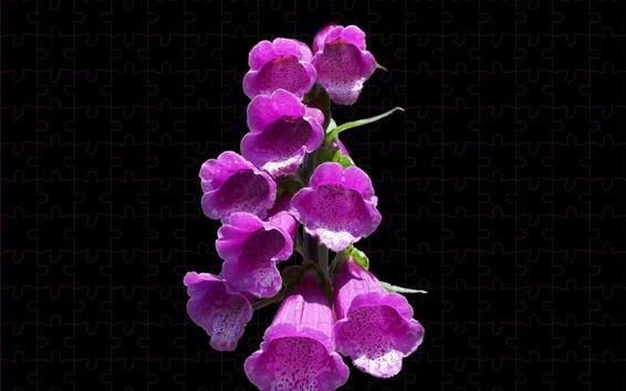 Fondos de pantalla Flores de campana rosa