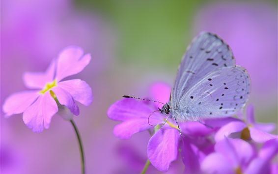 Papéis de Parede Flores cor de rosa, borboleta, asas
