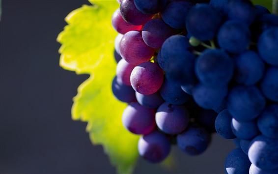 Wallpaper Purple grapes, delicious fruit