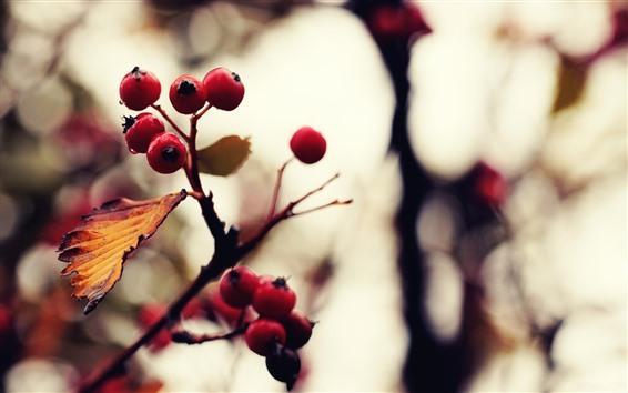 Fondos de pantalla Bayas rojas, ramitas, hojas, brumosas