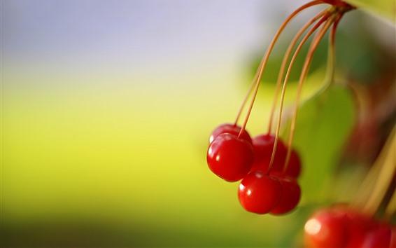 Обои Красная вишня крупным планом, зеленый фон