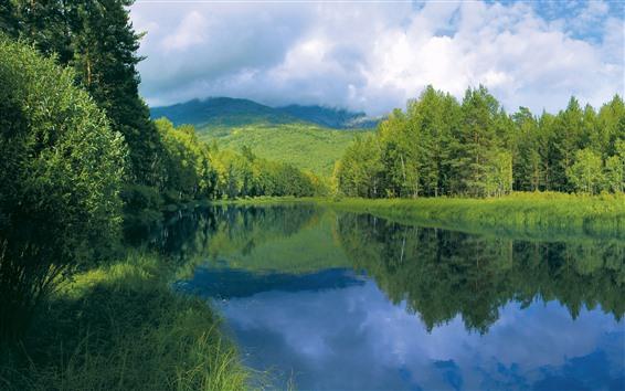 배경 화면 강, 나무, 산, 녹색, 구름, 여름