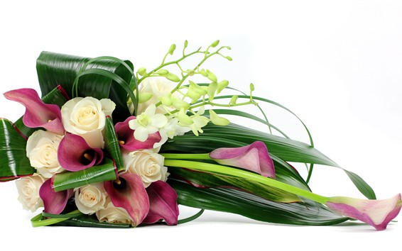 Обои Роза, калла, фаленопсис, белый фон