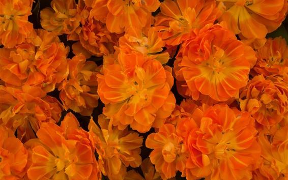 壁紙 オレンジ色の花