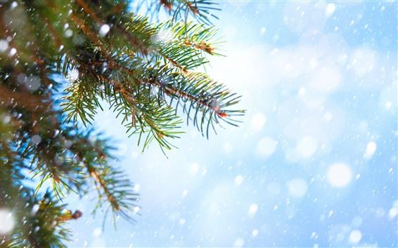 Papéis de Parede Galhos de abeto, nevado, inverno