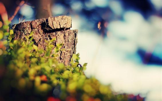 壁紙 切り株、茂み、かすみ