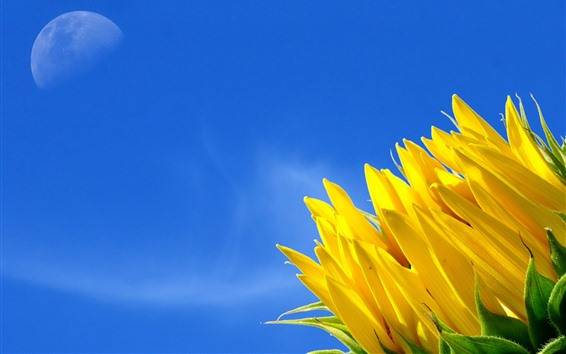 Wallpaper Sunflower, blue sky, moon