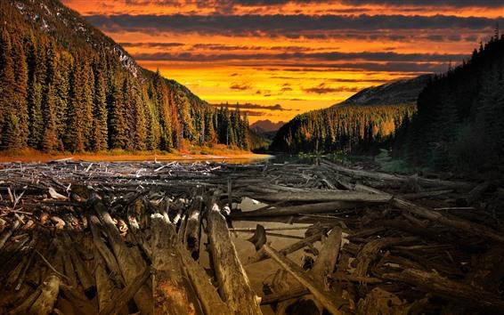 Papéis de Parede Pôr do sol, árvores, rio, nuvens, madeira