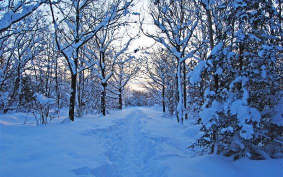 Papéis de Parede Suécia, árvores, neve espessa, inverno