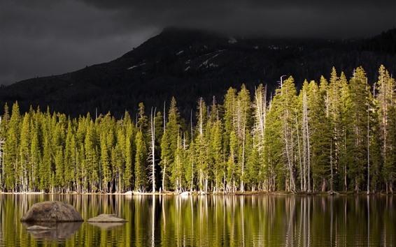 Papéis de Parede Árvores, floresta, lago vulcão, montanha, sombrio