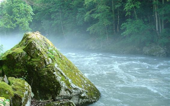 Papéis de Parede Árvores, rio, pedra, nevoeiro