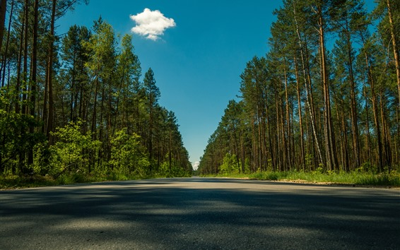 Wallpaper Trees, road, shadow, summer, blue sky