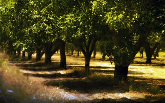Wallpaper Trees, summer, shadow, sunlight