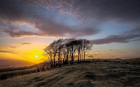 Papéis de Parede Árvores, pôr do sol, terras agrícolas