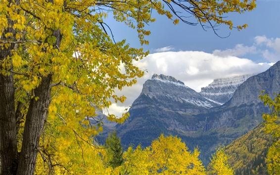 Papéis de Parede Árvores, folhas amarelas, montanha, outono