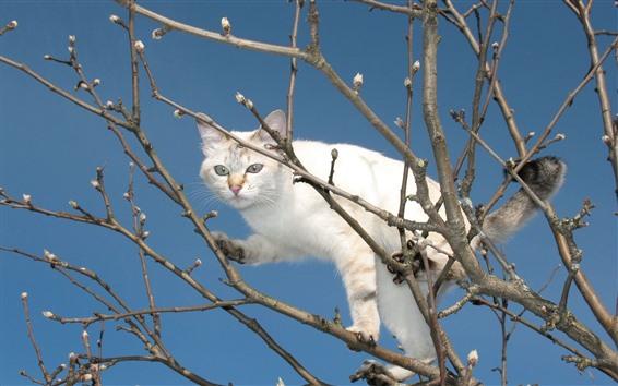 Обои Белый кот, дерево, веточки