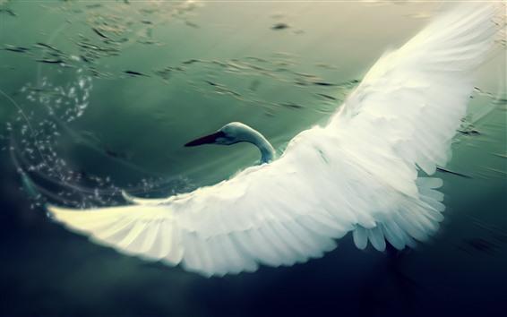 Wallpaper White swan flying, wings, lake