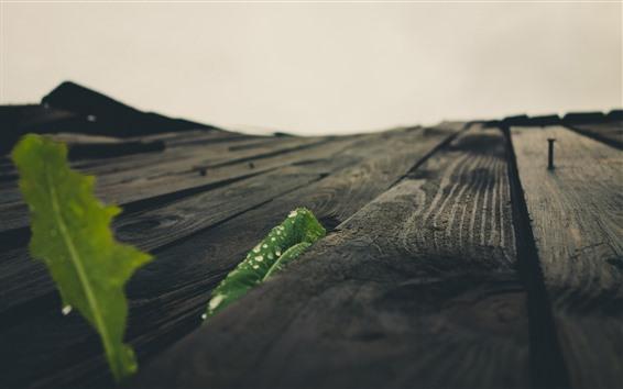 壁紙 木板の表面、緑の葉、水滴