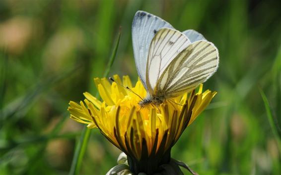 壁紙 黄色の花、白い蝶、翼