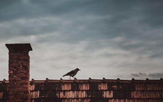 Обои Птица, крыша