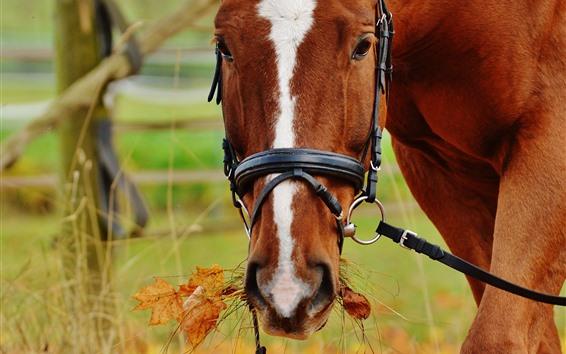 Обои Коричневый конь ест траву, голову, смотри