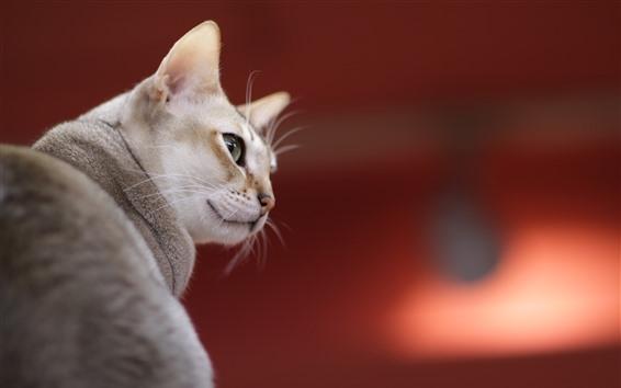 Обои Кошка оглянуться назад