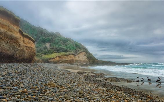 壁紙 海岸、石、鳥、海、波、山、雲