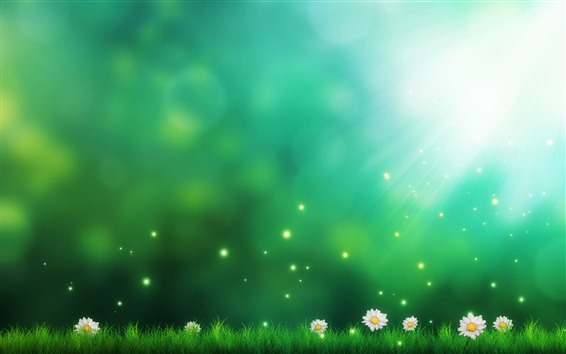 Wallpaper Daisies, green grass, sun rays, creative picture