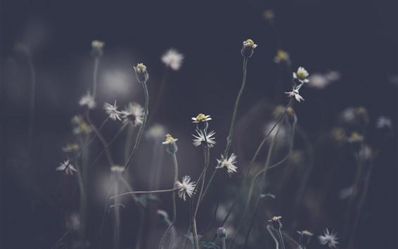 Обои Одуванчик, растения, серый фон