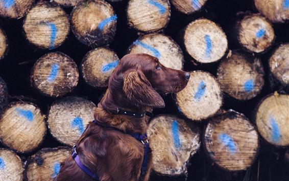 Papéis de Parede Vista lateral para cachorro, madeira