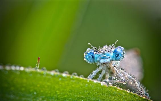 Papéis de Parede Libélula, gotas de água, olhos azuis