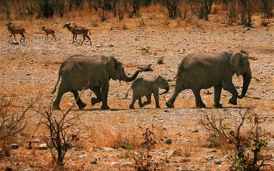 Papéis de Parede Elefantes, família, andar